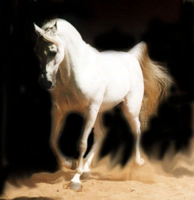 http://www.horsecity.ru/gallery/albums/userpics/10006/photo35%7E0.jpg